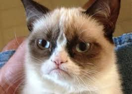 Gato Meme - meme creator gato no meme generator at memecreator org