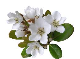 white flower free photo white flower with ant cut out free image on