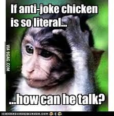 Meme Monkey - confused meme monkey 9gag