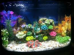 Aquarium Decoration Ideas Freshwater Stocking Ideas For 2 Tanks 55gal And 36gal Bow Front 157014