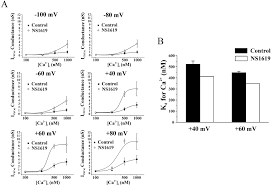 Nevada Abbreviation Related Keywords Amp Suggestions by Stimulation Of Ca2 Gated Cl Currents By The Calcium Dependent K