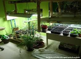 Indoor Vegetable Container Gardening - 62 best vegetable garden inside house images on pinterest indoor