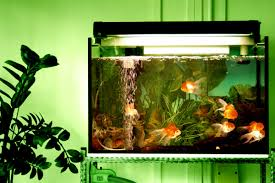 Live Plants In Community Aquariums by How Much And How Often Should I Feed My Fish