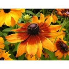 Flower Seeds Online - here you can buy organic exotic flower seeds online seeds gallery