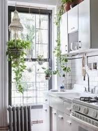see why reddit is freaking out over this apartment houseplants