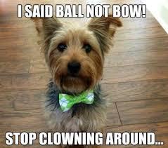 Meme Dogs - 11 marvelous meme monday dog memes petcentric by purina