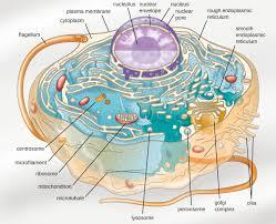 preface microbiology
