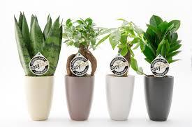 easy care easy car pot plants