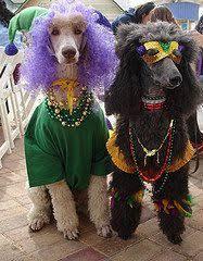 mardi gras dog dog mardi gras custom made costume mg20 for