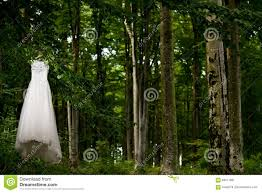 Hanging Tree Lights by Wedding Dress Hanging In Tree Stock Photo Image 83511861