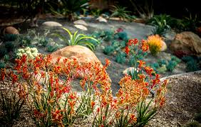 San Diego Landscape by 10 Best Landscaping Plants For San Diego Climate