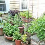 container gardening vegetables container gardening vegetables that