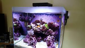 Fluval Sea Marine And Reef Led Strip Lights by Nano Reef Fluval M40 5 Months And New Tank Plans Youtube
