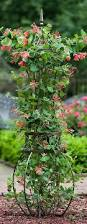 101 best trädgård klätterväxter images on pinterest garden
