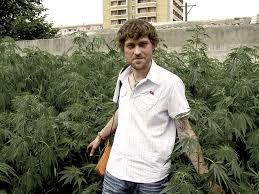 cannabis im garten cannabis in nordkorea