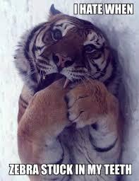 Funny Tiger Memes - meme i hate when zebra stuck in my teeth