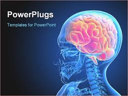 templates for powerpoint brain anatomy ppt templates free download brain powerpoint templates brain