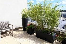 a tall balcony plant for privacy impossible planters ask