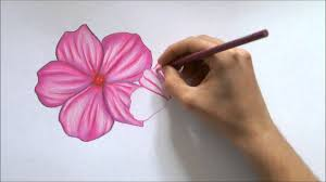 how to draw a flower color pencil drawing youtube