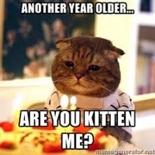 Funny Cat Birthday Meme - funny cat birthday photos prev funny cats next funny cats funny