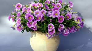 Flowers In Vases Pictures Beautiful Flowers In Vase Interior4you