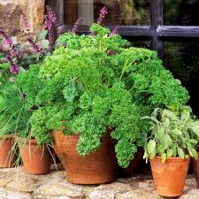 window sill gardening from suttons seeds