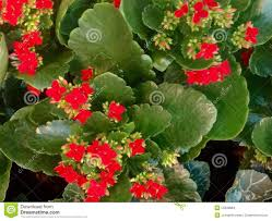 succulent house flowering house plants identification interior design