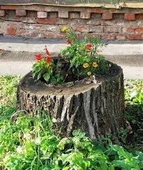Pictures Of Tree Stump Decorating Ideas 23 Best Tree Stump Ideas Images On Pinterest Tree Stumps A Tree