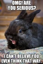 Ermahgerd Meme Creator - ermahgerd bunny imgflip