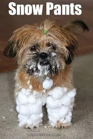 Snow Meme - funny snow meme google search i love winter snow