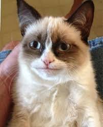 Grumpy Cat Meme Happy - happy grumpy cat know your meme