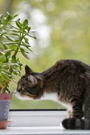 are there houseplants cats will leave alone u2013 how to protect