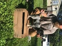 bluetick coonhound kennels in ga view ad bluetick coonhound puppy for sale maryland havre de