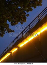 light lights illumination yellow fluorescent tree trees