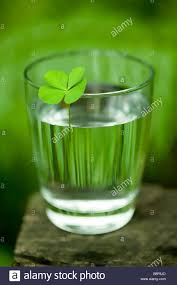 a four leaf clover on a glass of water stock photo royalty free
