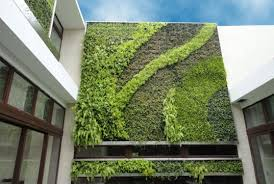 beautiful green vertical wall green wall garden alices garden