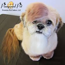 haircuts for shih tzus males image result for dog grooming bangs fleming pinterest