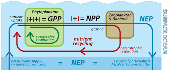 describe it the biological productivity of the ocean learn science at scitable