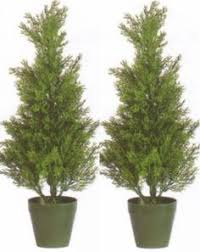 six 3 foot artificial cedar topiary trees potted indoor or outdoor