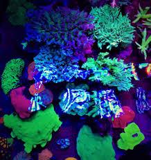 best lighting for corals aquarium led lighting photos best reef aquarium led lighting gallery