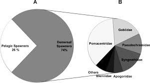 a percentage of demersal and pelagic spawning marine ornamental