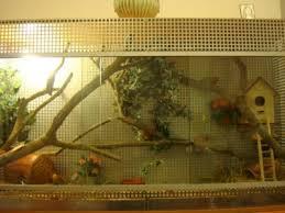 gabbie scoiattoli consigli per gabbia