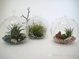 hanging glass terrarium kit succulent plant terrarium garden
