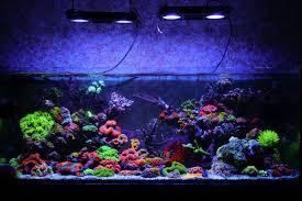 Floating Aquascape Reef2reef Saltwater And Reef Aquarium Forum - july 2014 r2r tank spotlight jourdy salt water aquariums