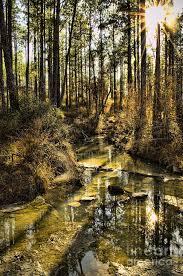 Louisiana National Parks images Longleaf vista trail kisatchie national forest louisiana us jpg