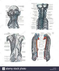 Human Anatomy Atlas 4 Views Of The Human Head Spine And Back An Atlas Of Human