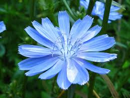 Blue Flower Backgrounds - blue flower backgrounds wallpaper wallpaper hd background desktop