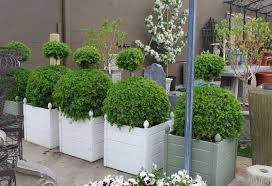 Potted Garden Ideas Best Plants For Potted Garden Ideas Home Inspirations Newest
