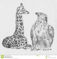 giraffe and eagle sketch drawing stock illustration image 57973924