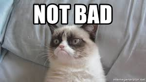 Not Bad Meme Generator - not bad grump cat not bad meme generator